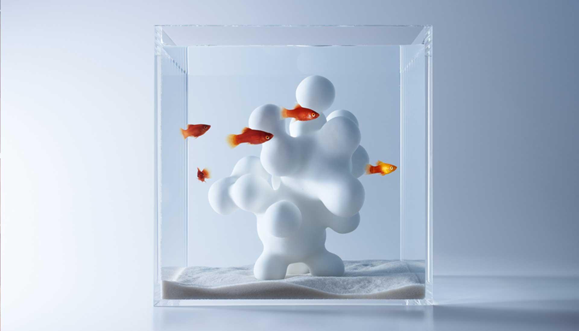 Fische fangen